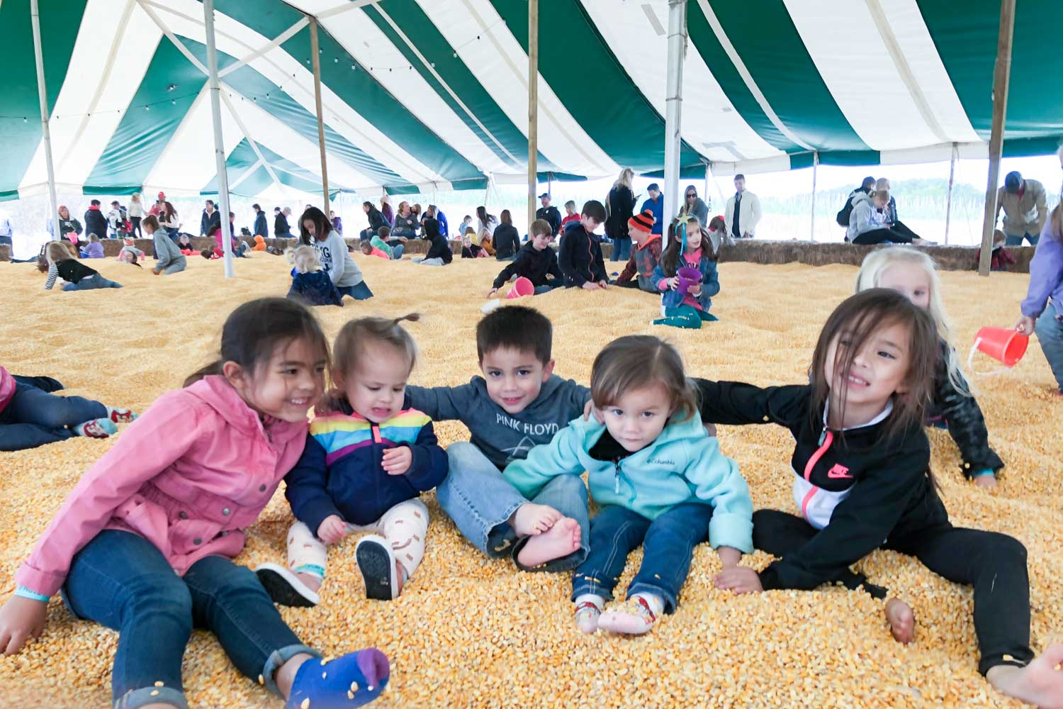 kansas city pumpkin patch - carolyns country cousin largest corn pit