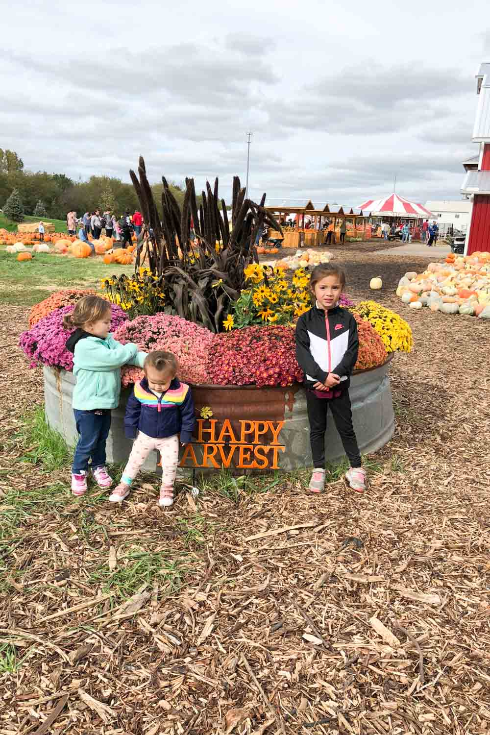 kansas city pumpkin patch - carolyns country cousin