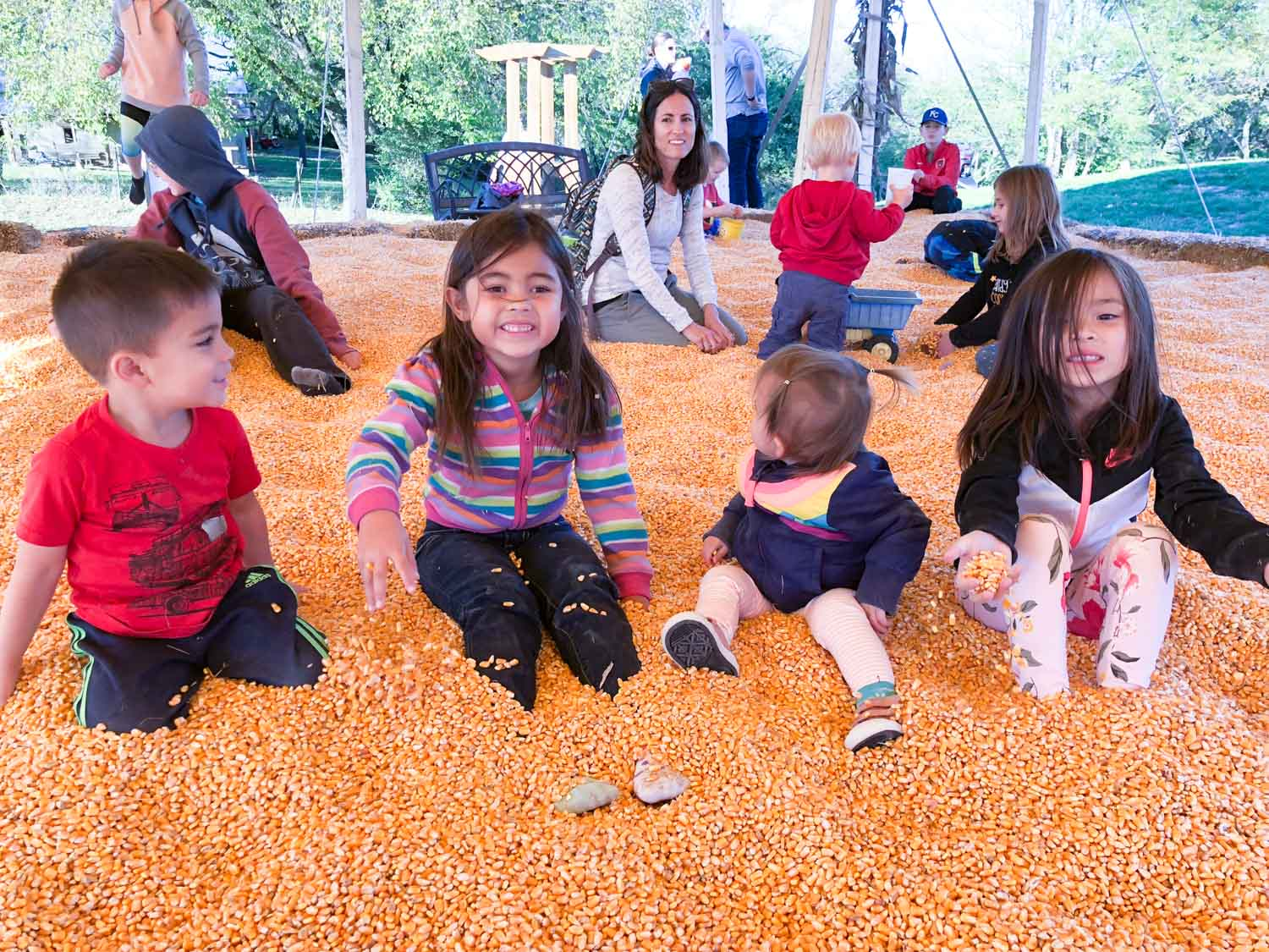 faulkner's pumpkin ranch - corn pit