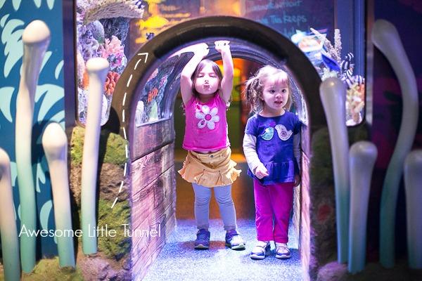 Sea Life Kansas City review and tour on sengerson.com for fun kid activities in Kansas City.