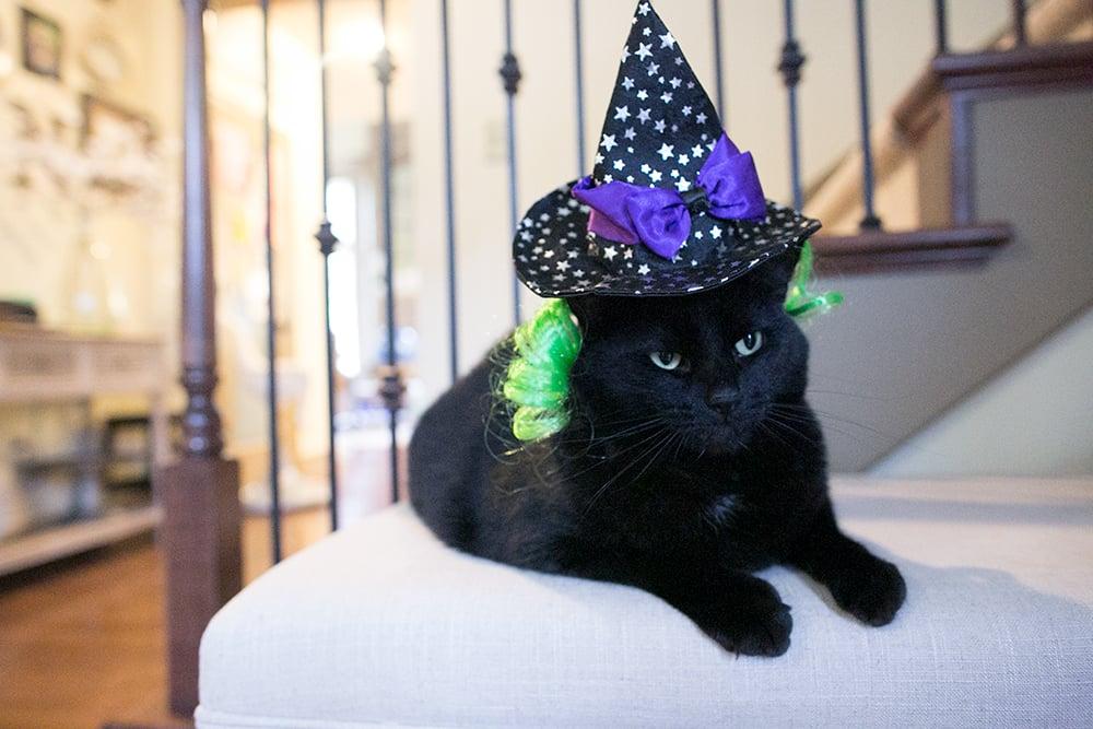 cat-toy-catnip-horizontal
