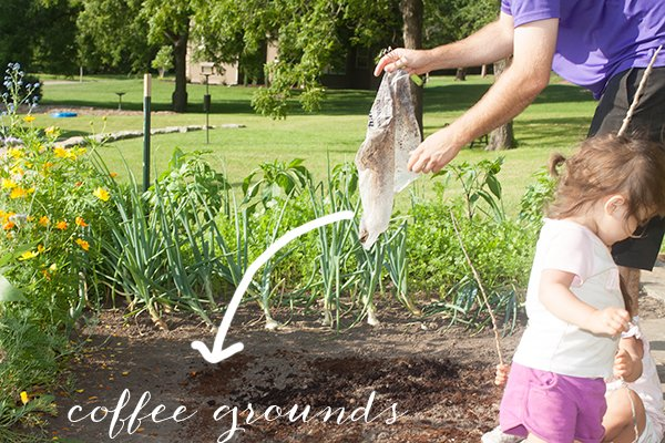 Our first year gardening Coffee grounds for garden