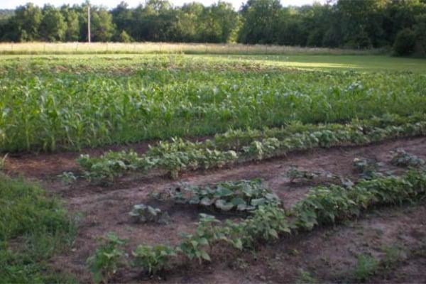 our-half-acre-garden-01