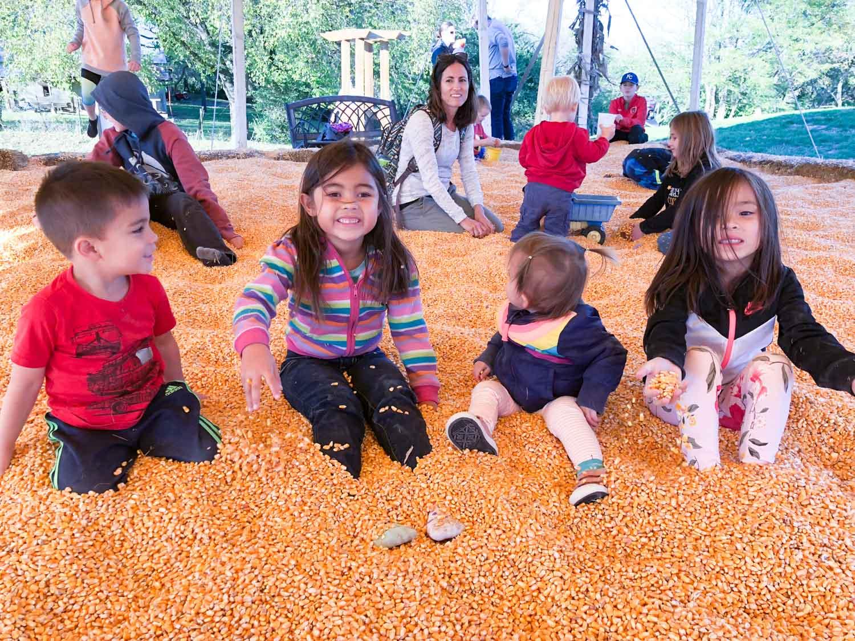 faulkner's pumpkin ranch - corn pit